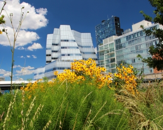 Yellow flowers on the High Line park in New York City with modern office building in the background.