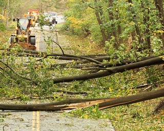 Downed trees and power lines on a road with emergency response equipment