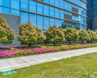 Office building exterior with lawn turf and ornamental flower beds.
