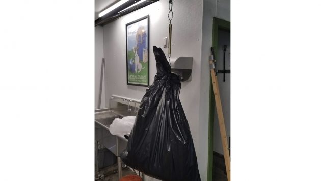 A picture of weighing waste to record in your waste audit.